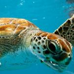 Dykning på Barbados